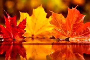 Осенний поцелуй.